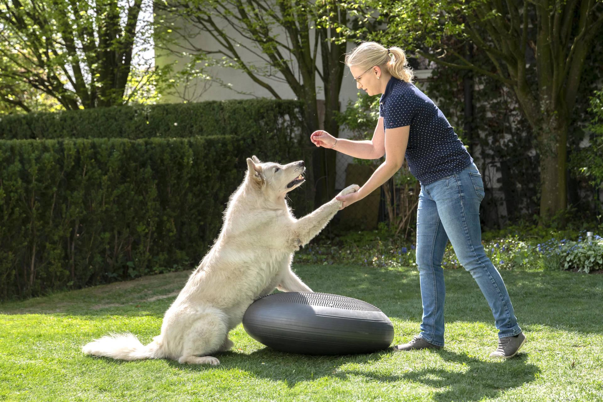 Warum solltest Du mit deinem Hund gerade zu mir kommen und wozu brauchen wir dieses Bewegungstraining überhaupt?